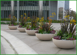 Nothing Warms Up A Room, Home, Office Or Building Like Plants. The PLANTRY  Has A Wide Selection Of Plants To Soften Formal Conference Rooms, ...